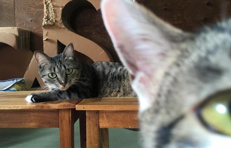 """ネコと暮らしたい方のための""""猫可""""専門不動産仲介サイト"""