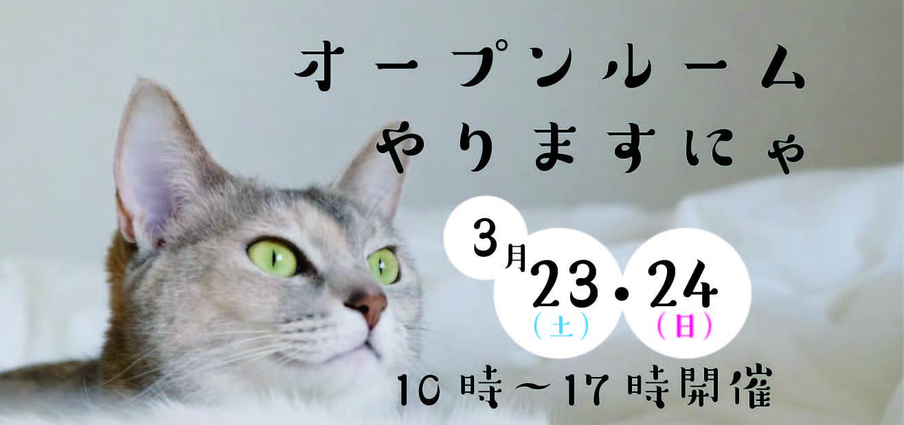 ★feel CnB★猫と暮らす新築デザイナーズマンション<03月19日更新>