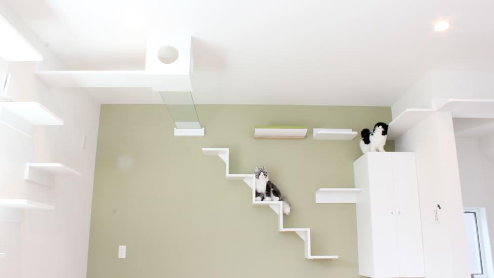 ◆続報◆さらば賃貸、新築にゃん戸建の詳細だ!やっぱ完全猫仕様でした。