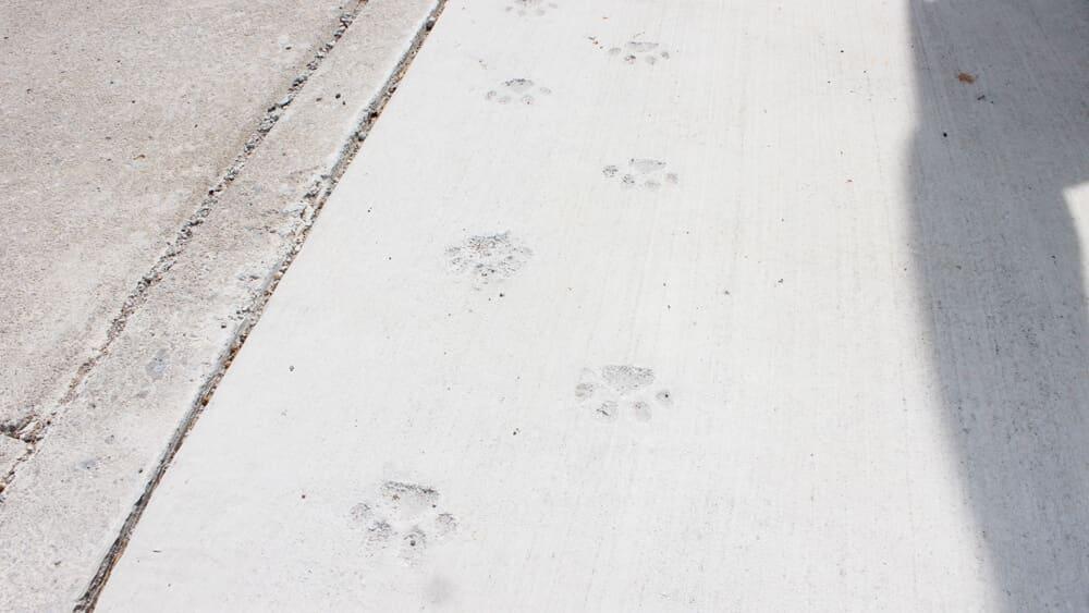 玄関には、猫の足跡!?