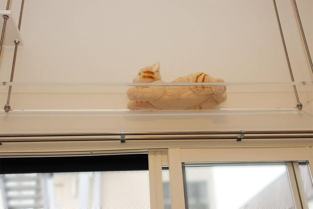 アクリルの透明キャットウォーク。猫さんのお腹と肉球見放題。