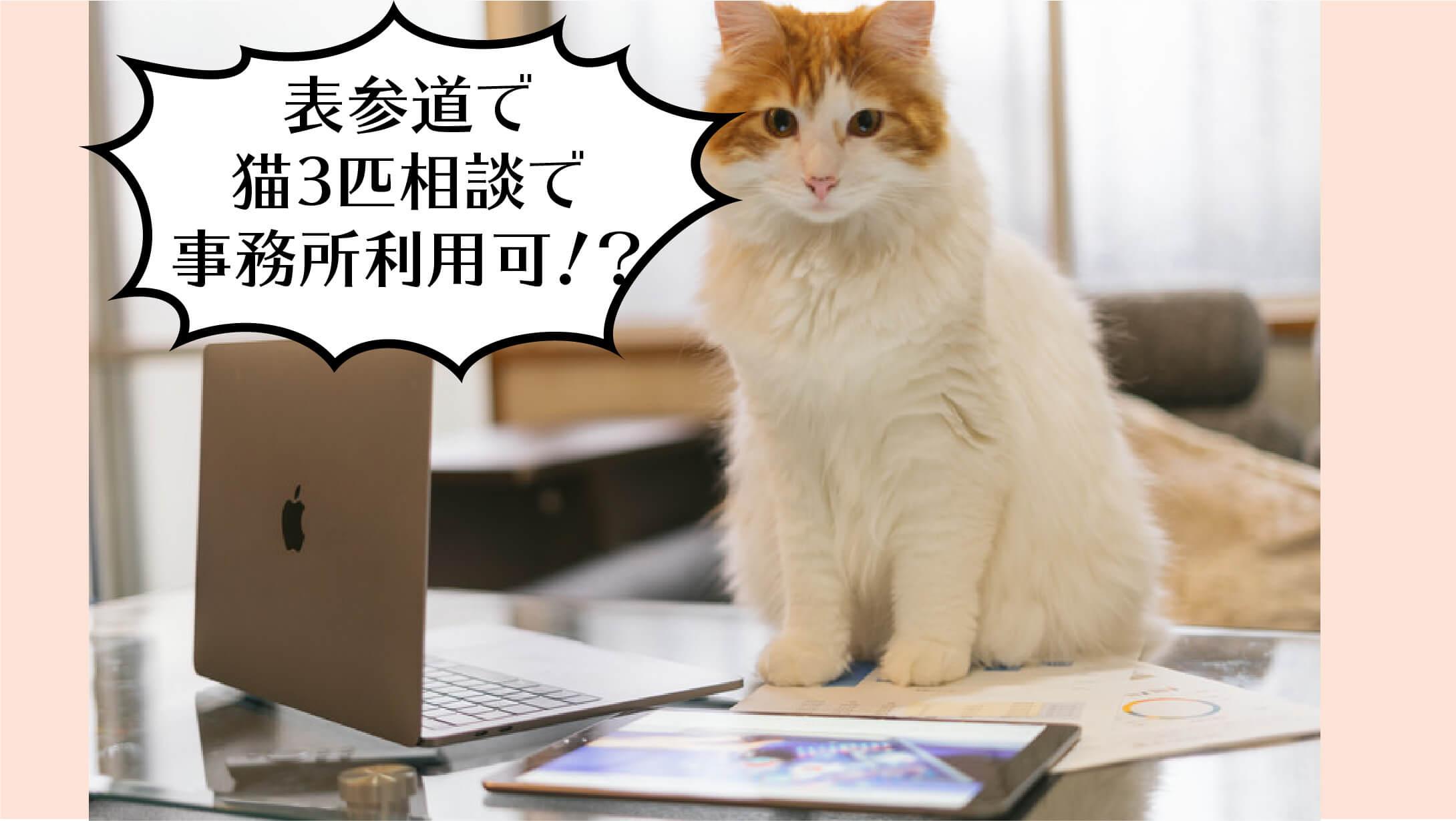 表参道でネコと暮らす、ネコと働く。